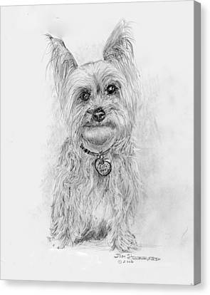 Yorkshire Terrier Canvas Print by Jim Hubbard