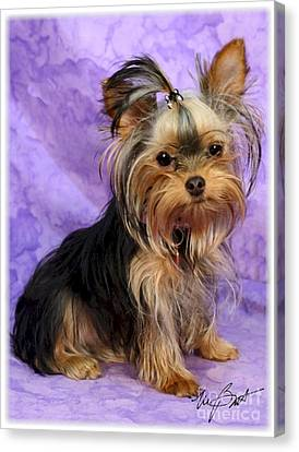 Yorkshire Terrier Pup Canvas Print by Maxine Bochnia