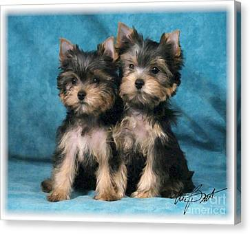 Yorkshire Terrier Pups 2 Canvas Print by Maxine Bochnia