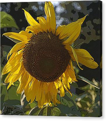 Canvas Print featuring the photograph You Are My Sunshine by Cheri Randolph