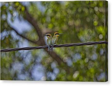 Top-end Canvas Print - You Watch My Back And I Will Watch Yours by Douglas Barnard