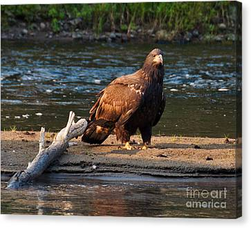 Canvas Print featuring the photograph Young And Wise by Cheryl Baxter