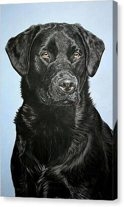 Young Black Labrador Canvas Print by Lucy Swinburne