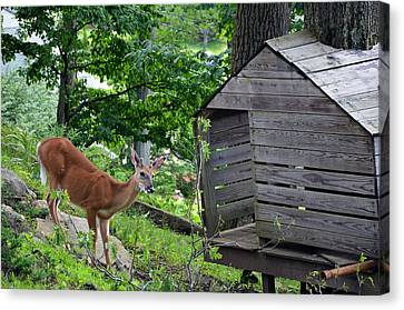 Canvas Print featuring the photograph Young Buck At Treehouse Hopatcong by Maureen E Ritter