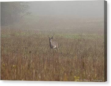 Young Buck Canvas Print by Charles Warren