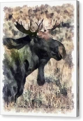 Canvas Print featuring the photograph Young Bull Moose by Clare VanderVeen