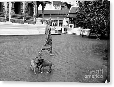 Young Dogs Canvas Print by Dean Harte