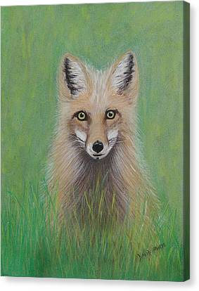 Young Fox Canvas Print by David Hawkes