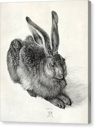 Young Hare, By Durer Canvas Print by Sheila Terry