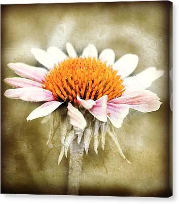 Young Petals Canvas Print by Julie Hamilton