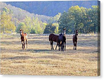 'youngsters In The Paddock' Canvas Print by PJQandFriends Photography