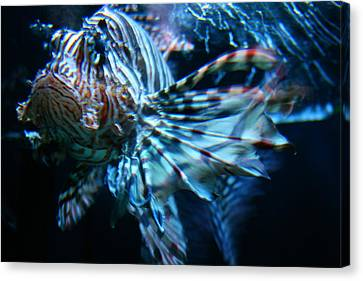 Your Lion Fish Canvas Print by Karl Reid