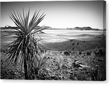 Yucca With A View Canvas Print