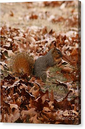 Canvas Print featuring the photograph Yummy Snack by Julie Clements