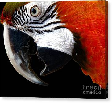 Zazzo The Macaw Canvas Print by Kevin Moore