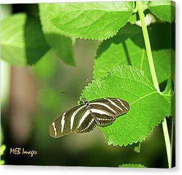 Zebra Butterfly Canvas Print