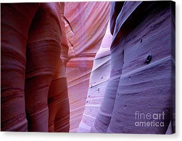 Zebra Canyon Canvas Print