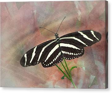 Zebra Longwing Butterfly-3 Canvas Print by Rudy Umans