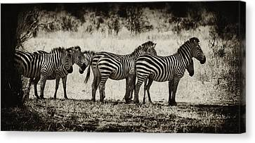 Zebras In A Row Canvas Print by Jess Easter