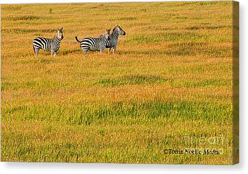 Zebras Canvas Print by Tonia Noelle