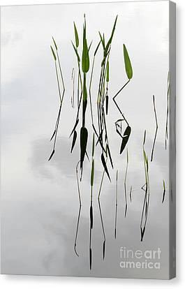 Zen Canvas Print by Sabrina L Ryan