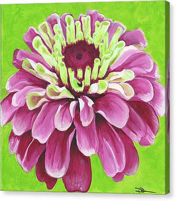 Zinnia Canvas Print by Debbie Brown