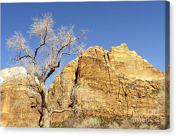 Canvas Print featuring the photograph Zion Winter Sky by Bob and Nancy Kendrick