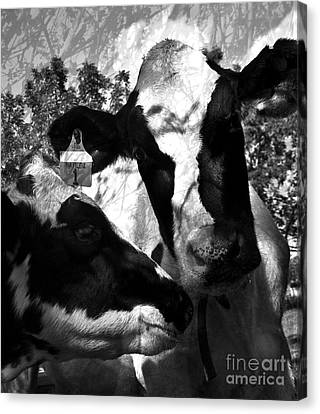 Zoey Plays With Matilda Canvas Print