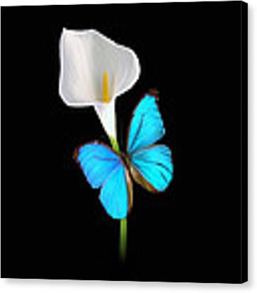 Morpho On Calla Canvas Print by David Armstrong