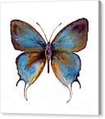 48 Manto Hypoleuca Butterfly Canvas Print by Amy Kirkpatrick