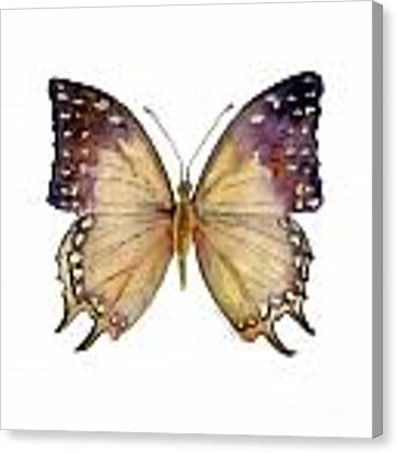 63 Great Nawab Butterfly Canvas Print
