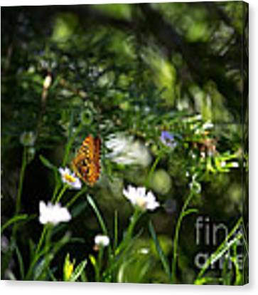 A Butterfly's World Canvas Print by Belinda Greb