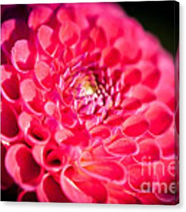 Blooming Red Flower Canvas Print by John Wadleigh