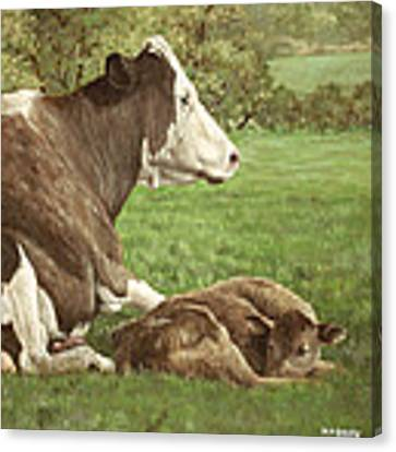 Cow And Calf In Field Canvas Print