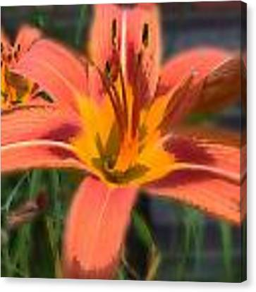 Day Lilly Canvas Print by David Armstrong