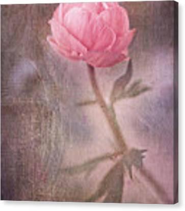 Dream-struck Canvas Print