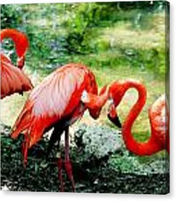 Flamingo Friends Canvas Print by Beverly Stapleton