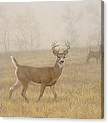 Foggy Morning-whitetail Canvas Print by Paul Krapf