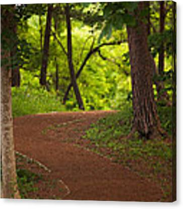 Forest Path Canvas Print by Brad Brizek