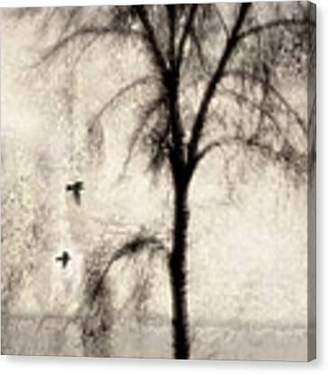 Glimpse Of A Coastal Pine Canvas Print