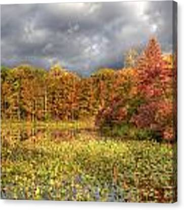 Golden Light And Autumn Leaves Canvas Print by At Lands End Photography