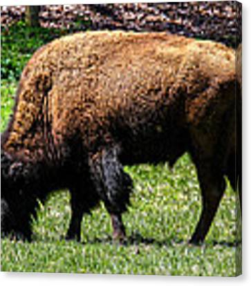 Grazing In The Grass Canvas Print by Robert L Jackson