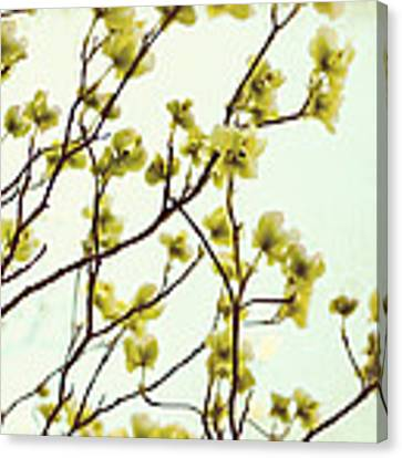 Green Dogwood Canvas Print