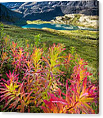 Grizzly Bear Fireweed Canvas Print by Tim Newton