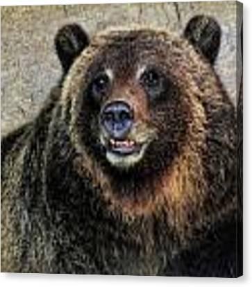 Happy Grizzly Bear Canvas Print by Elaine Malott