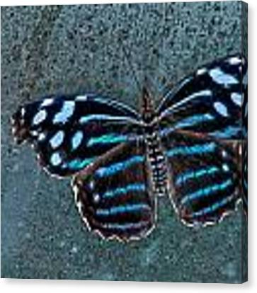 Hdr Butterfly Canvas Print by Elaine Malott