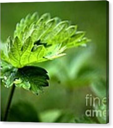 Just Green Canvas Print by Jeremy Hayden