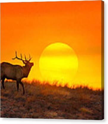Kiss The Sun Canvas Print by Kadek Susanto