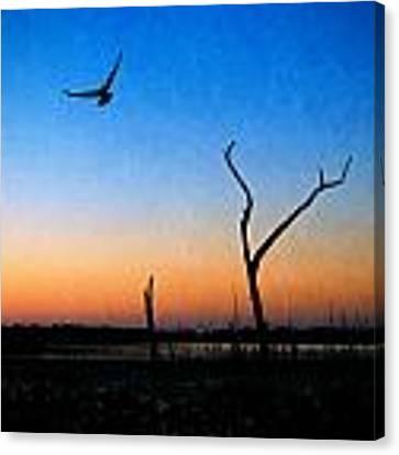 Last Light Canvas Print by Beverly Stapleton