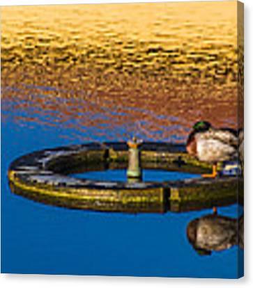 Male Mallard Duck Canvas Print by Carolyn Marshall